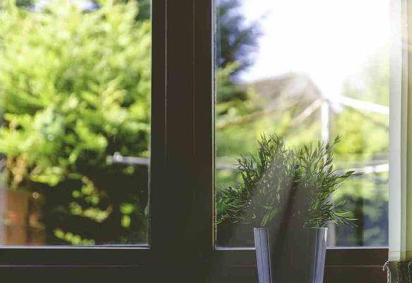 Badezimmer Pflanze