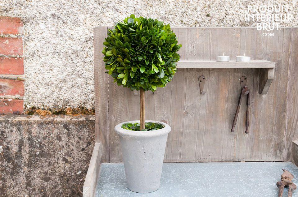 Buchsbaum in grauem Pflanztopf