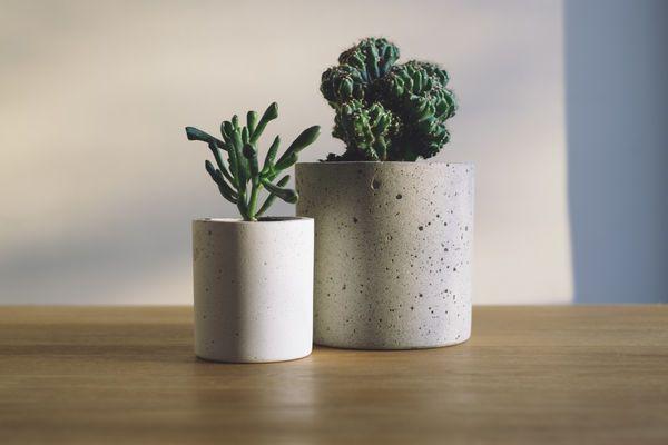 Indoor Pflanzen
