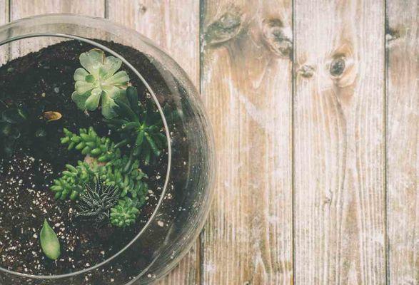 Pflanze im Glass Terrarium