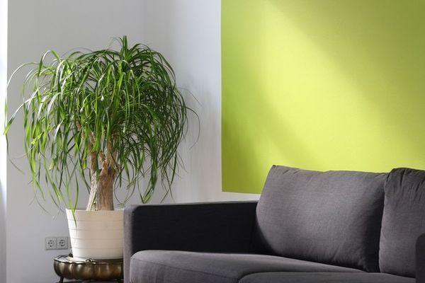 Wohnzimmerpflanze